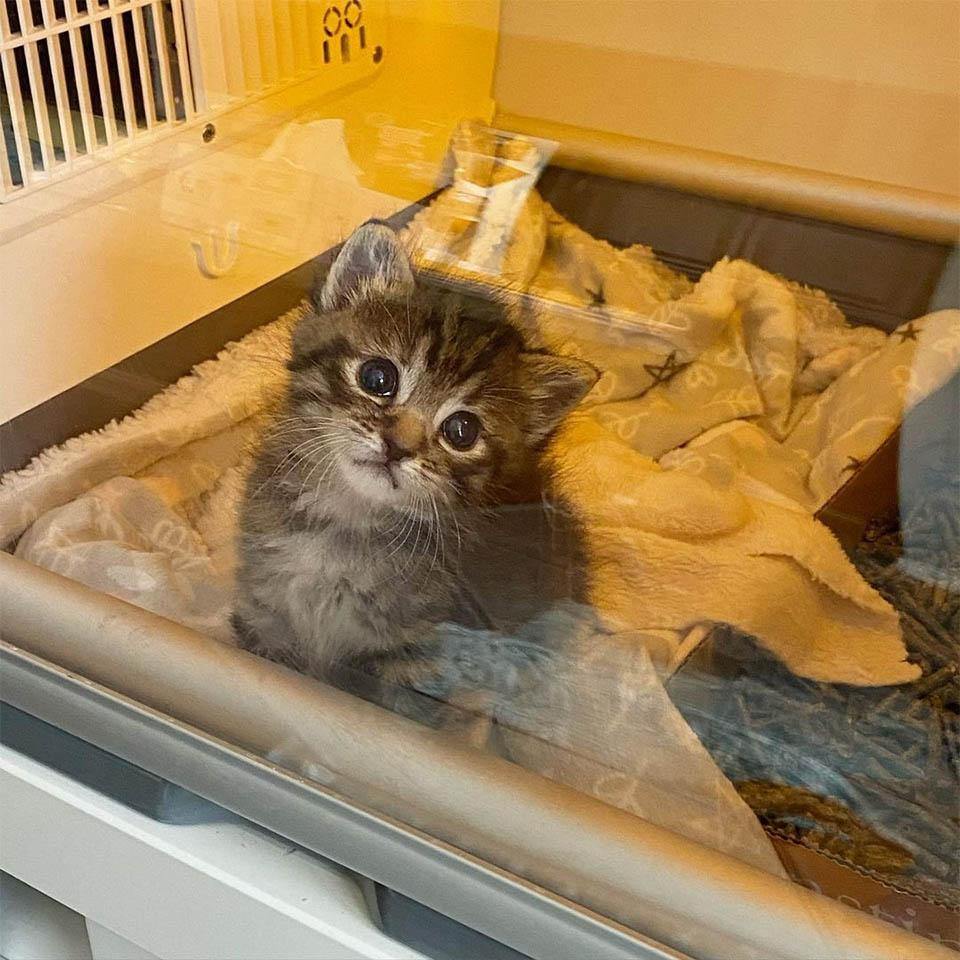 Matilda en incubadora