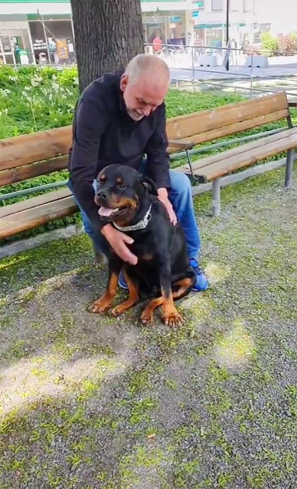 Perro consuela a un extraño en el parque