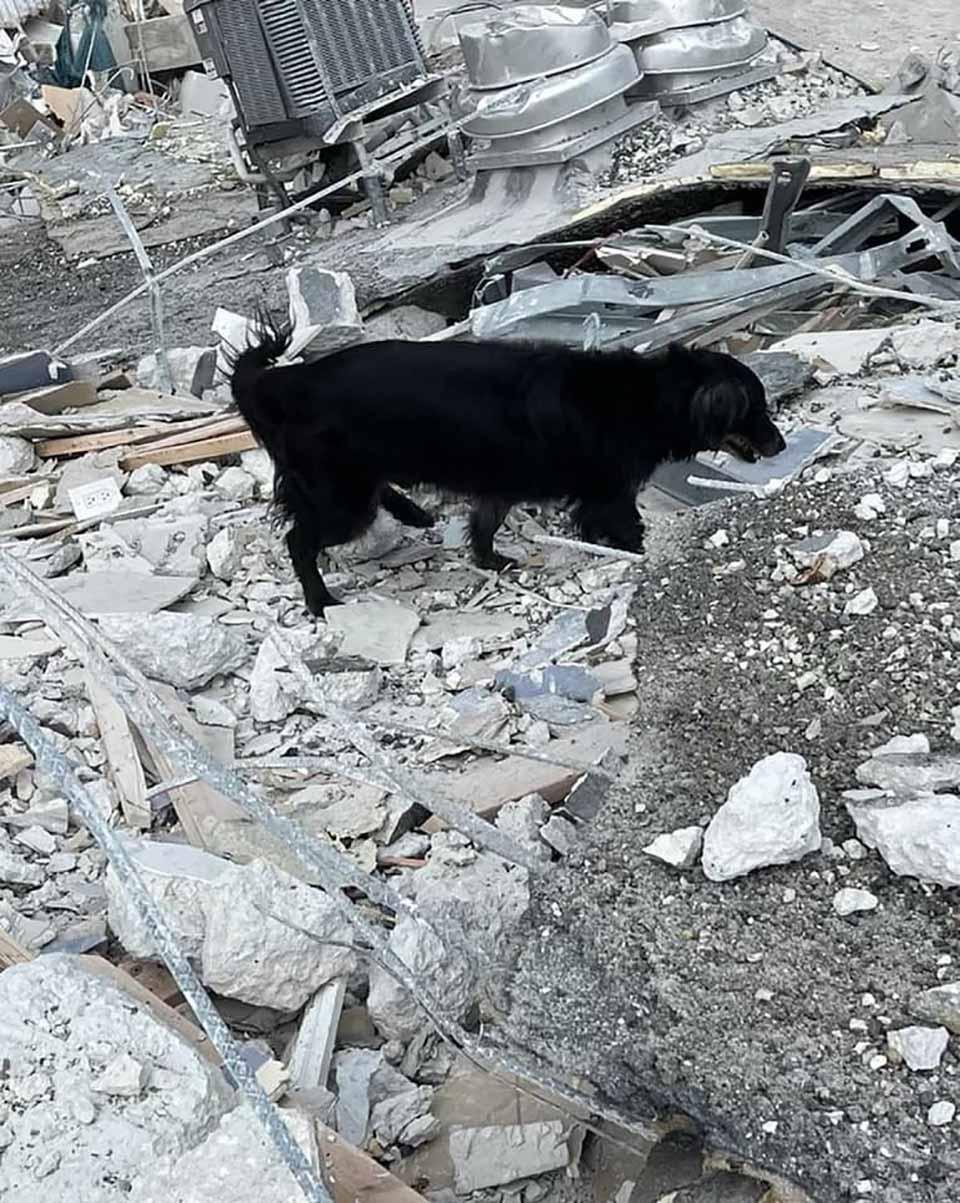 Perro de rescate