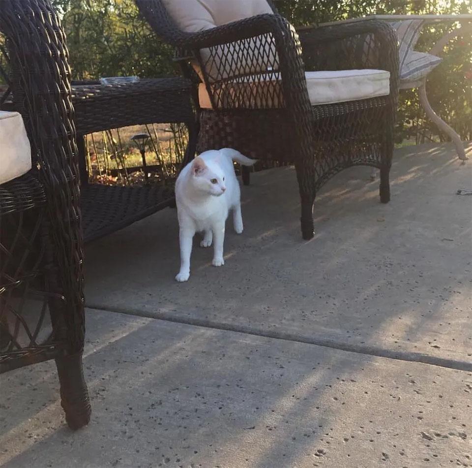 Sophie en la calle