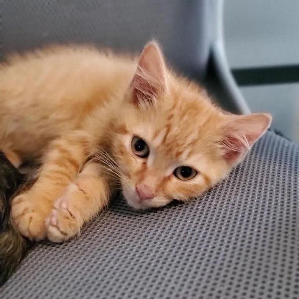 Adorable gatito rescatado