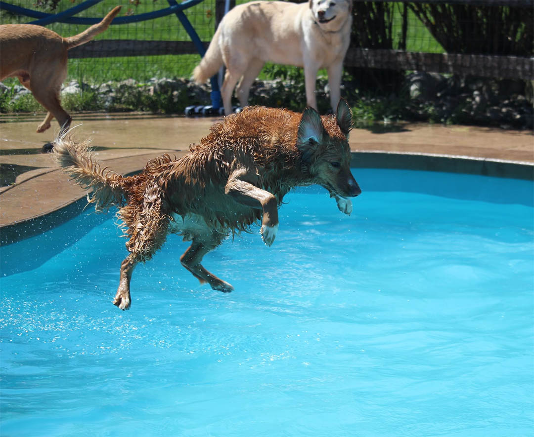 Animales saltando piscina