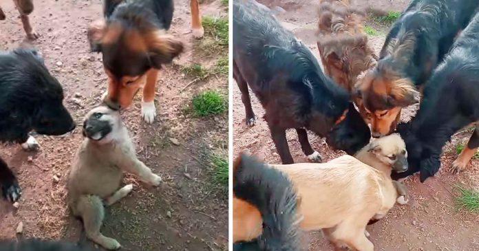Cachorro recibe la bienvenida más dulce de todos los perros rescatados en el refugio