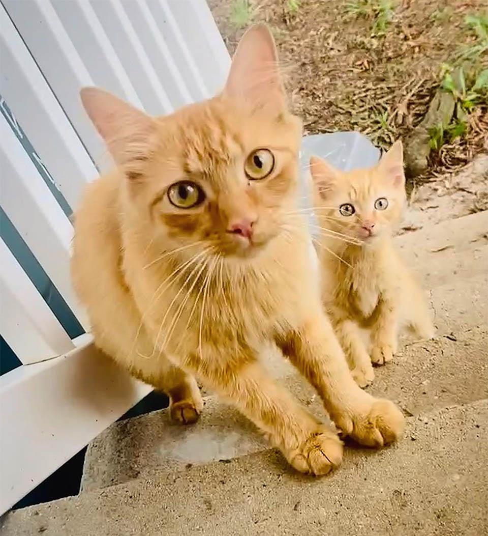 Gata trae gatito