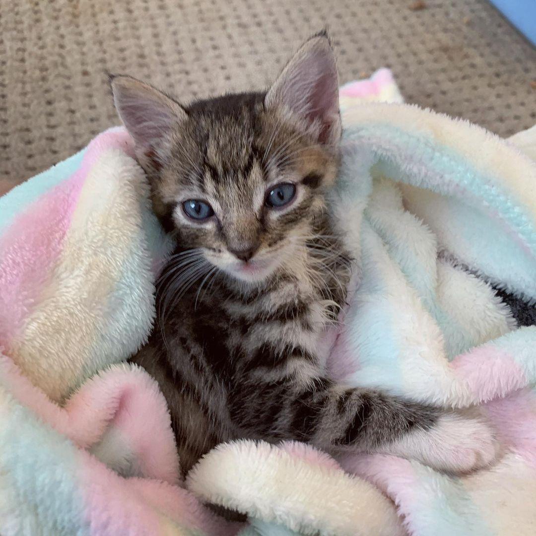 Gatito de tres patas le demuestra a todos lo que puede hacer