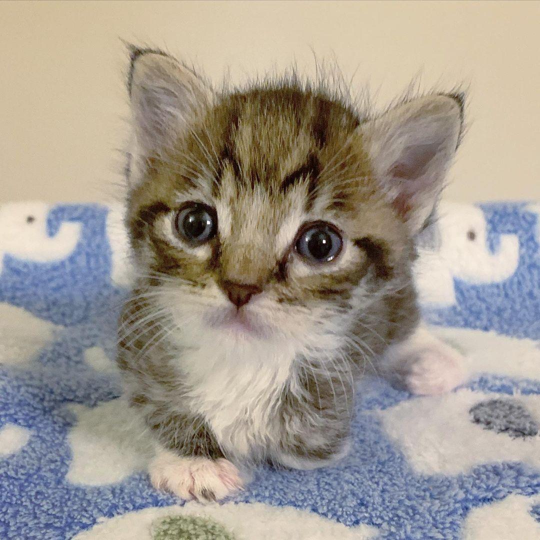 Gatito de tres patas