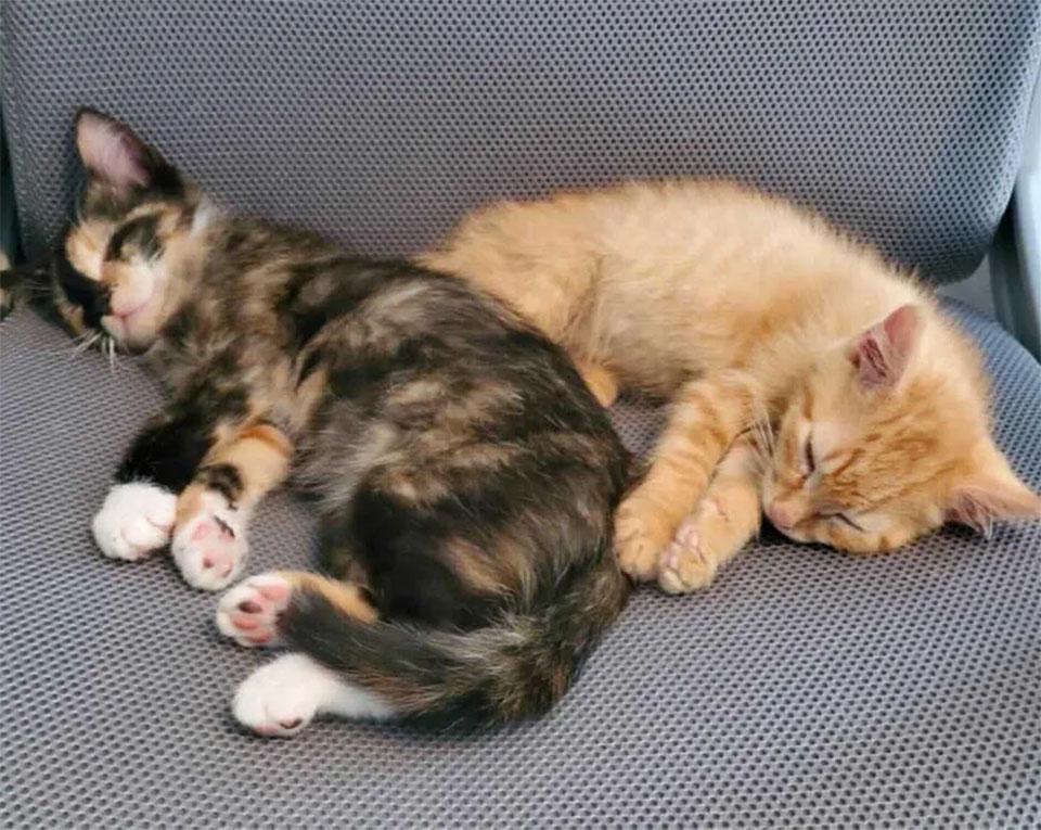 Gatitos descansando