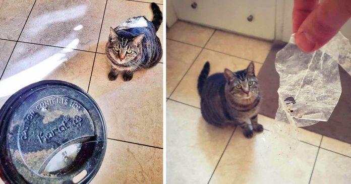 Gato recolecta 'tesoros' para dárselos a sus padres todos los días
