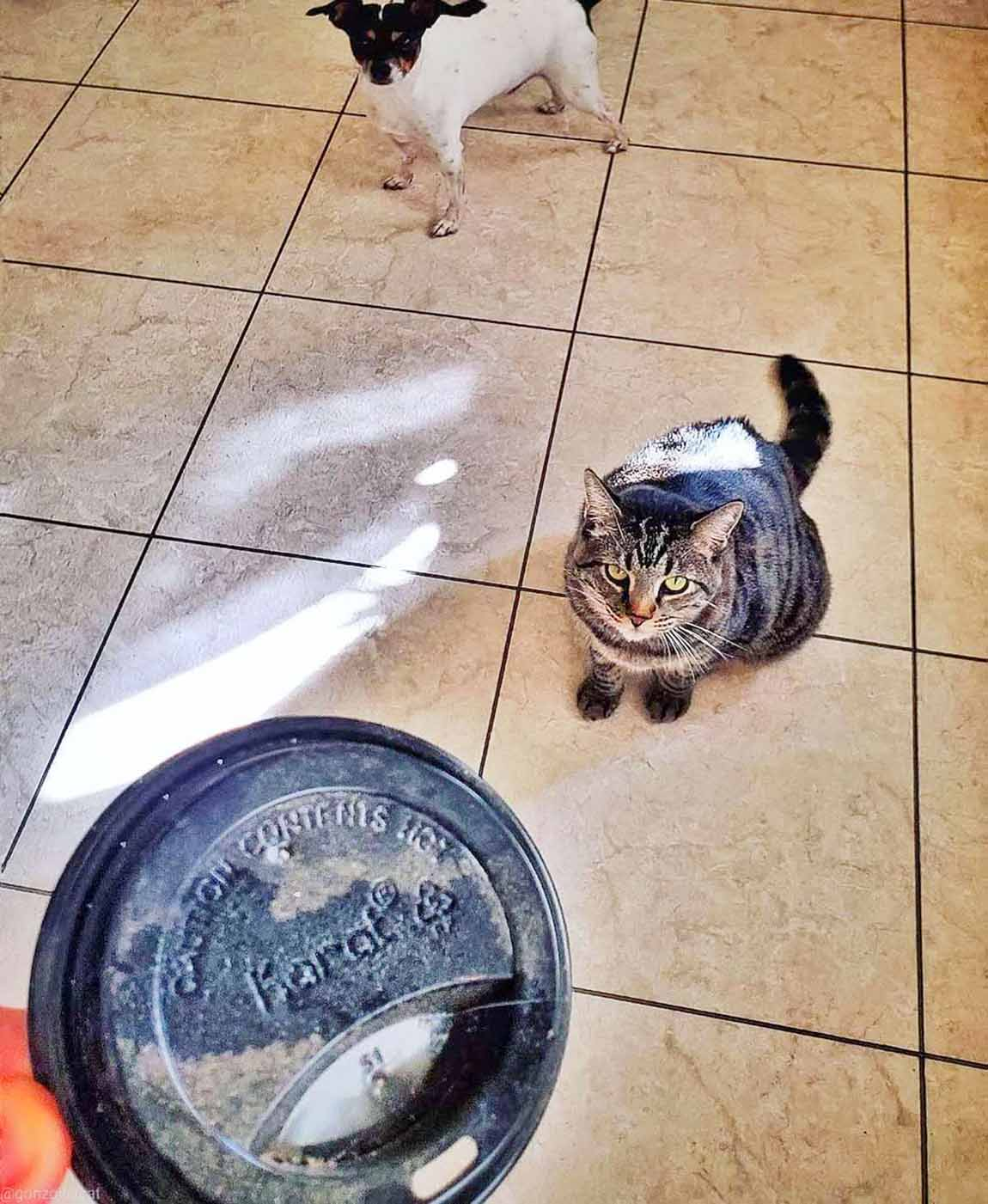 Gato recolecta tesoros para dárselos a sus padres