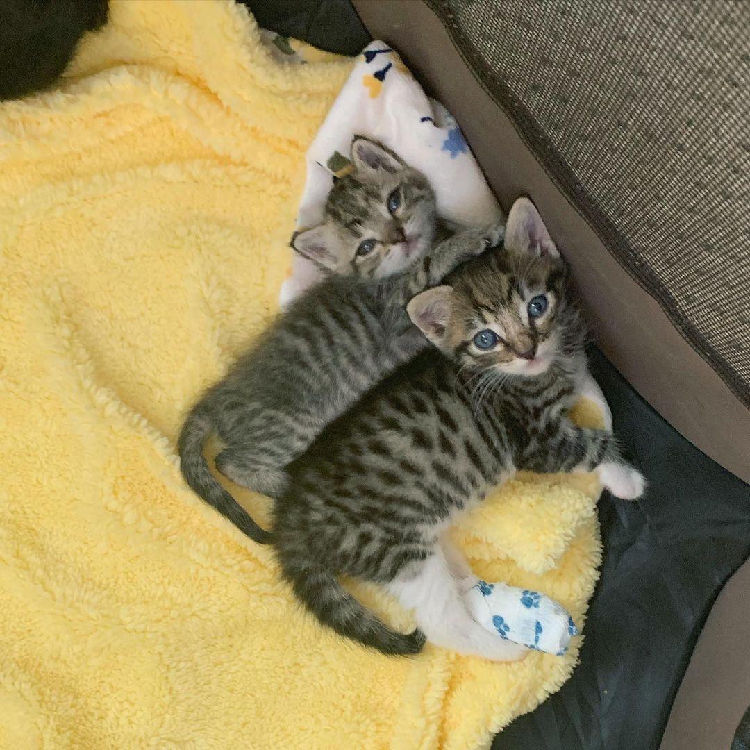Gatos tomando siesta