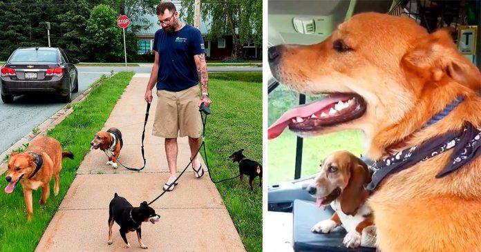 Hombre paseando con 4 perros