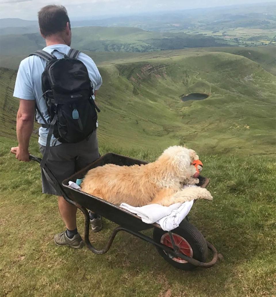 Hombre lleva perro