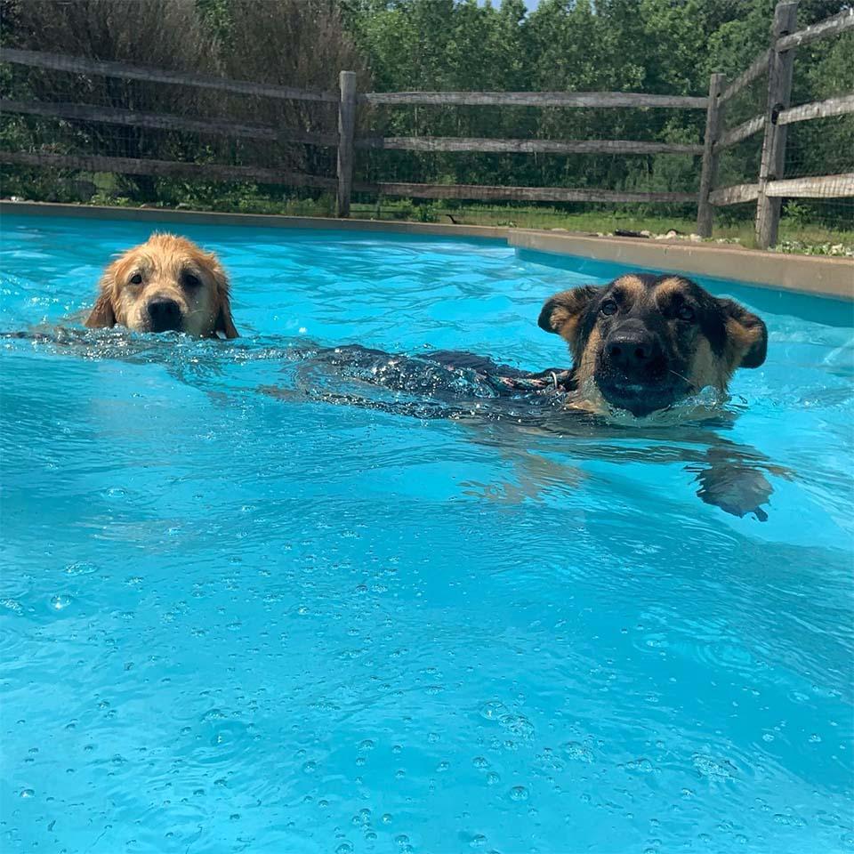 Huéspedes nadando
