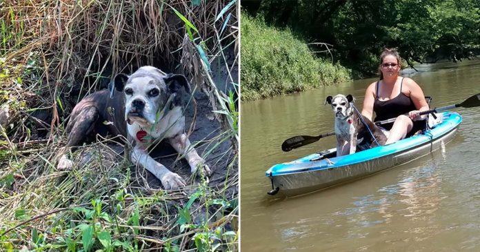 Kayakistas encuentran perrita perdida en el río