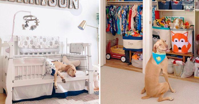 Mujer crea cuarto bebé bienvenida perro