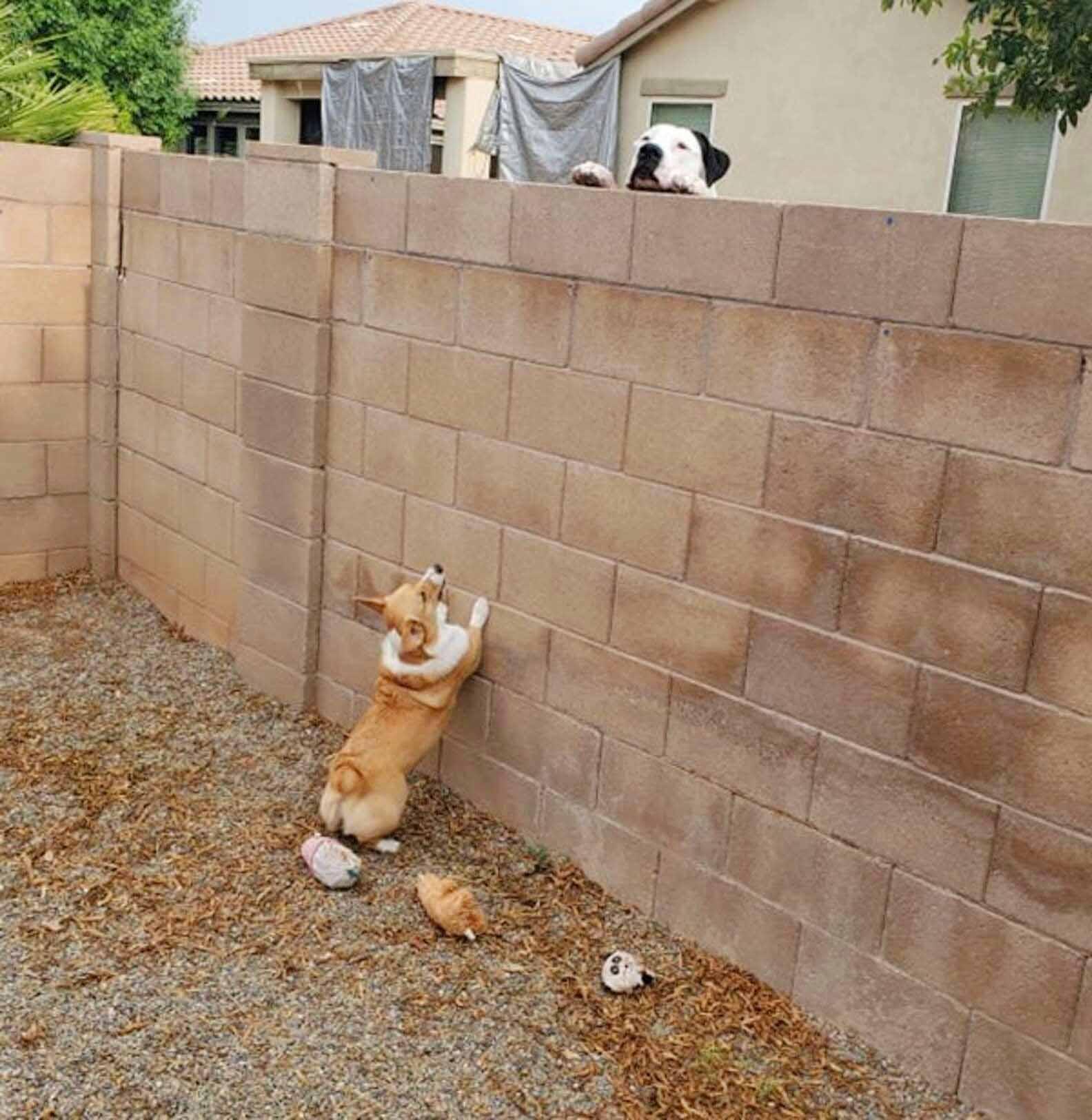 Perrito teniendo reuniones secretas con el perro vecino