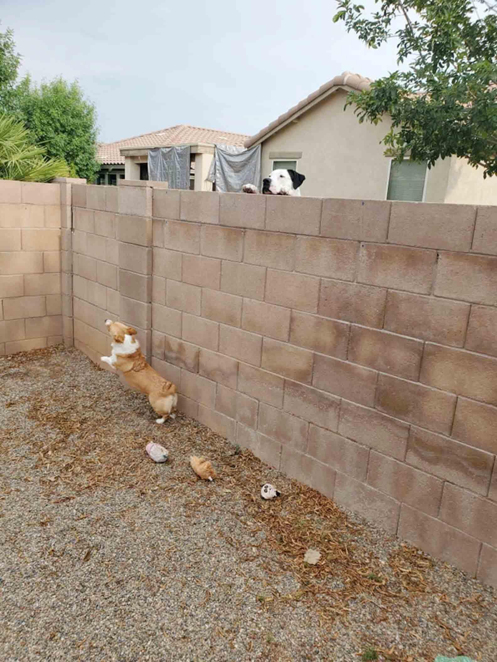 Perritos en la cerca