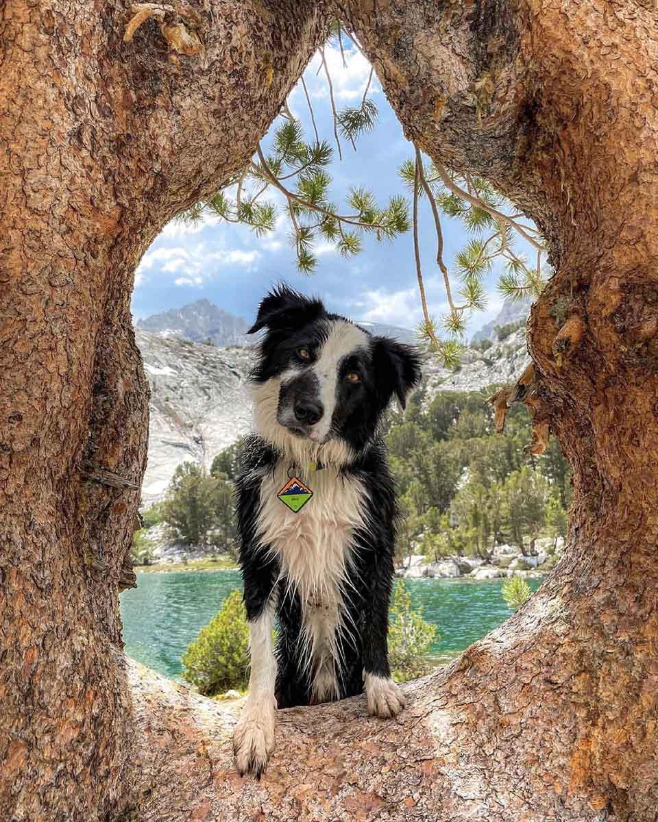 Perro disfruta del paisaje