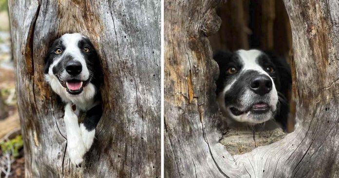 Perro encuentra un lugar acogedor en un árbol y decide subirse a él