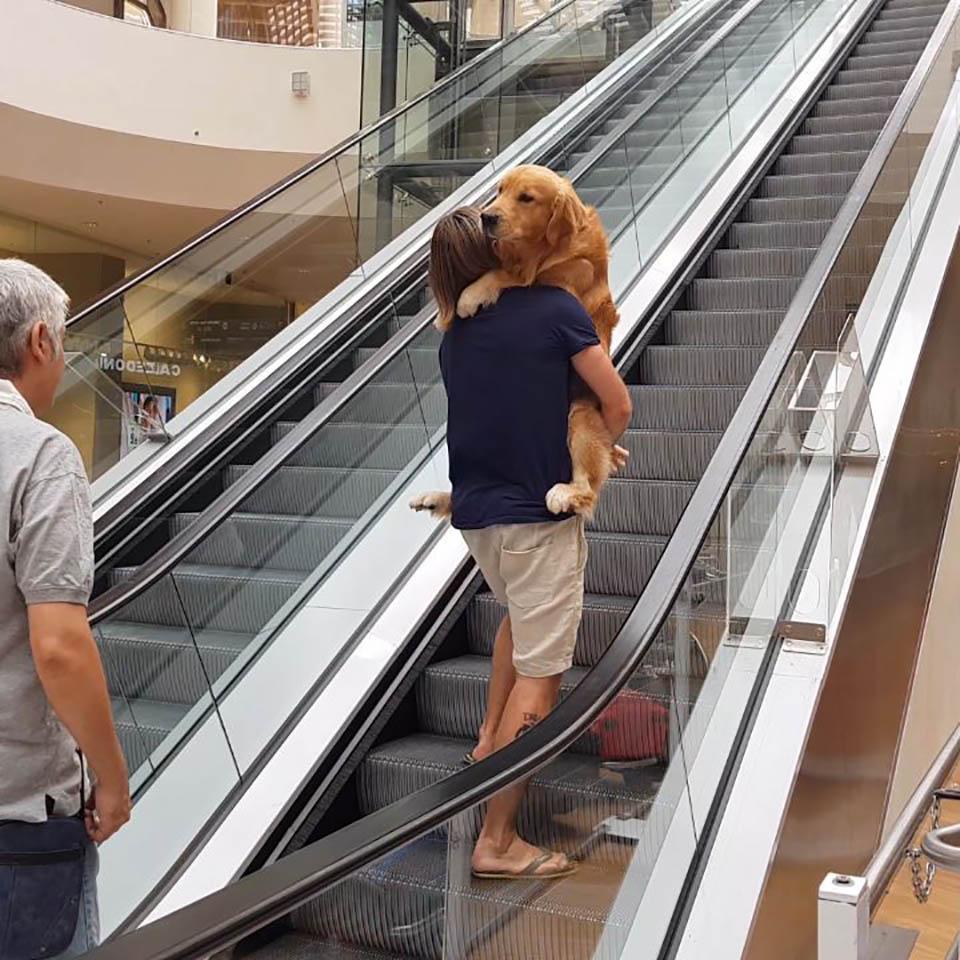 Perro le teme a las escaleras eléctricas