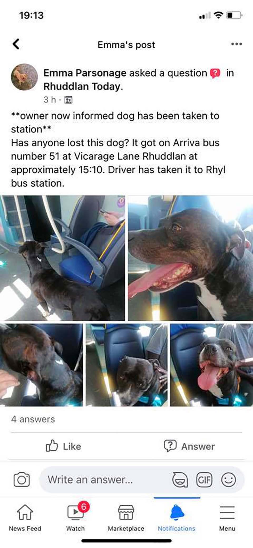 Perro se escabulló para tomar el autobús