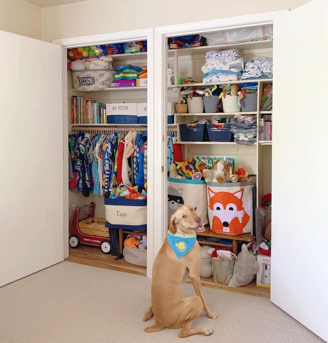 Perro y su guardarropas