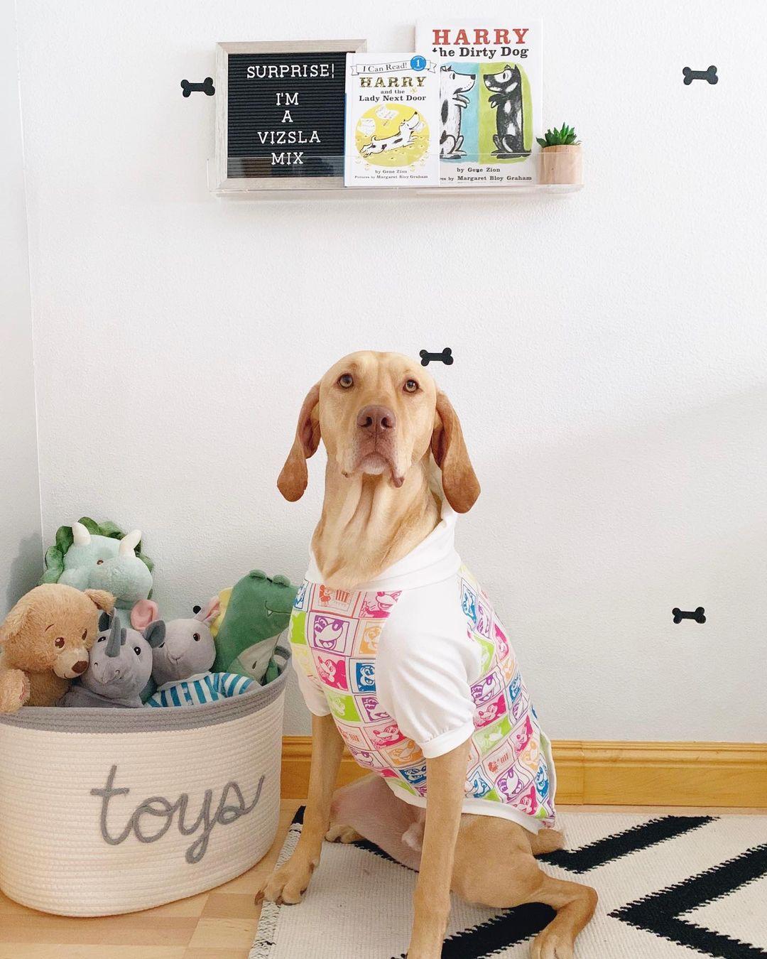 Perro y sus juguetes