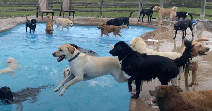 Perros divierten piscina forma hueso guarderia