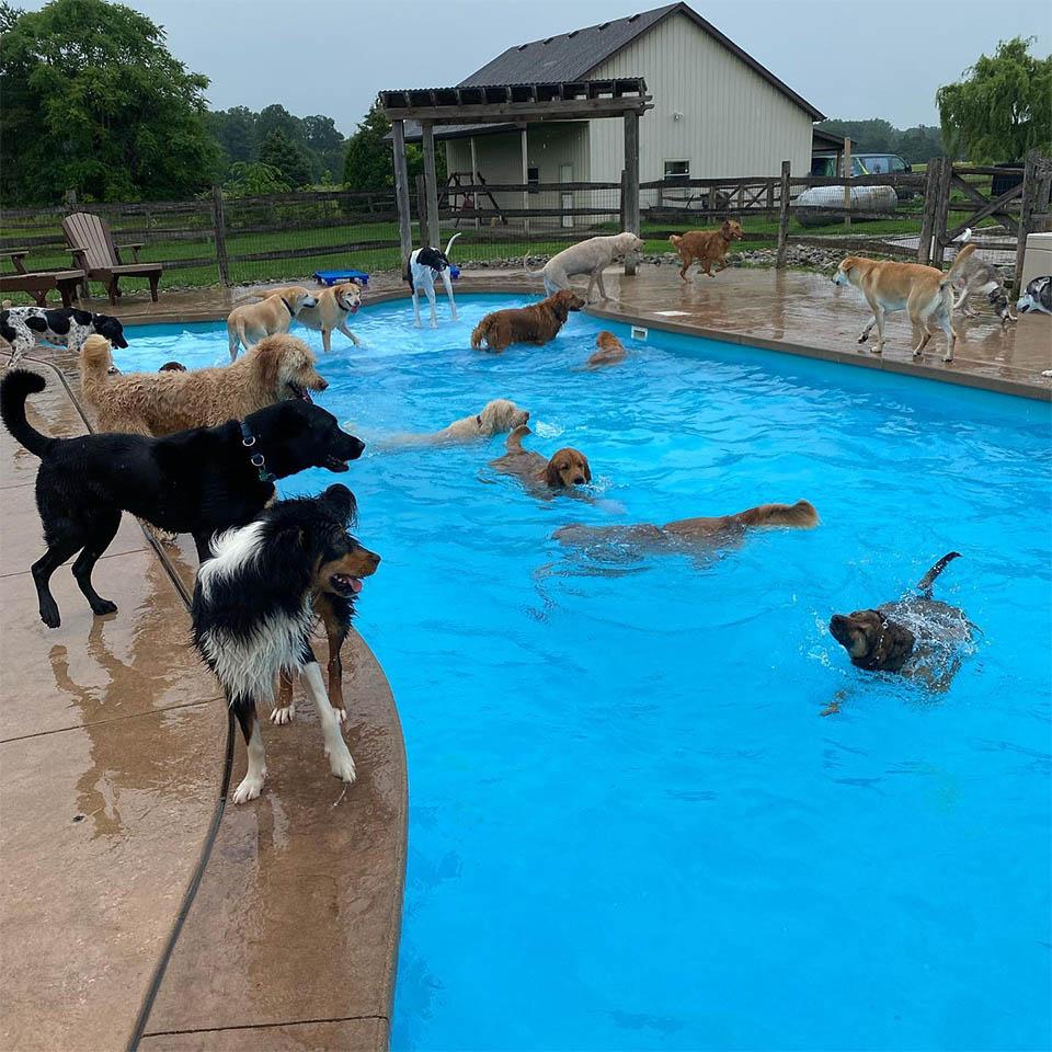 Perros se divierten en piscina