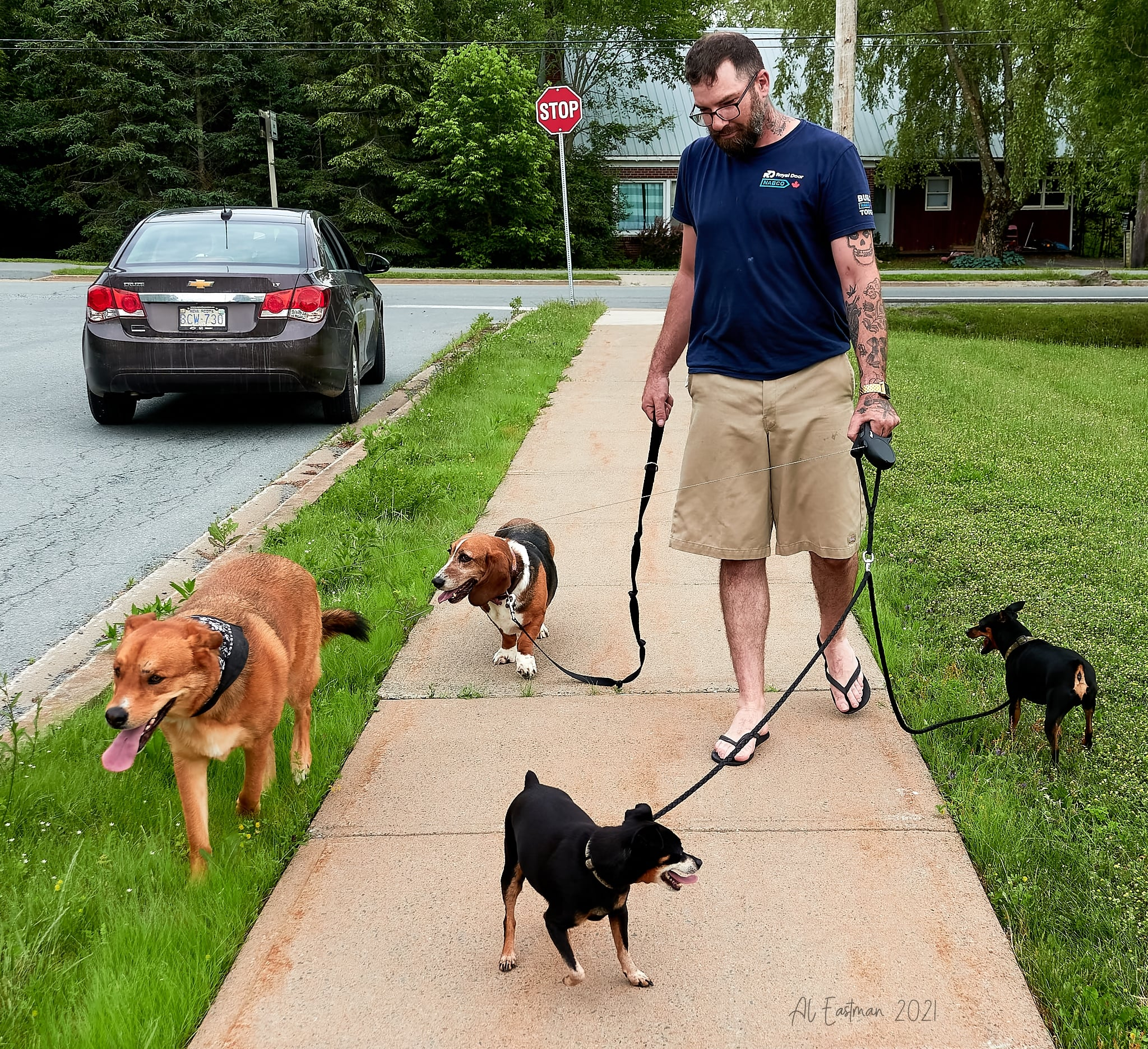 Hombre descubre a 2 perros en un accidente