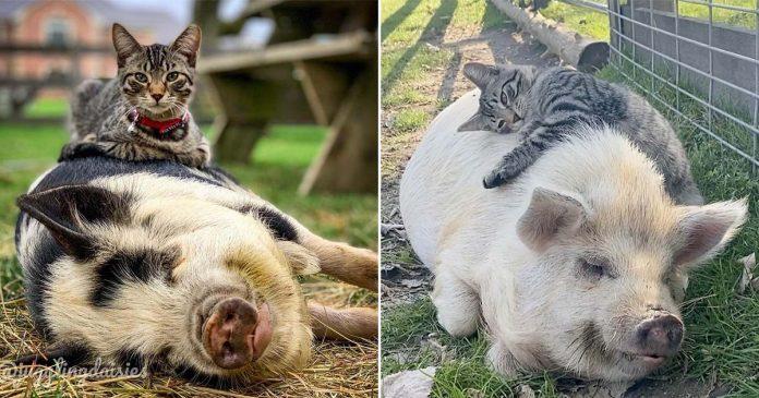 A este gato le encanta masajear