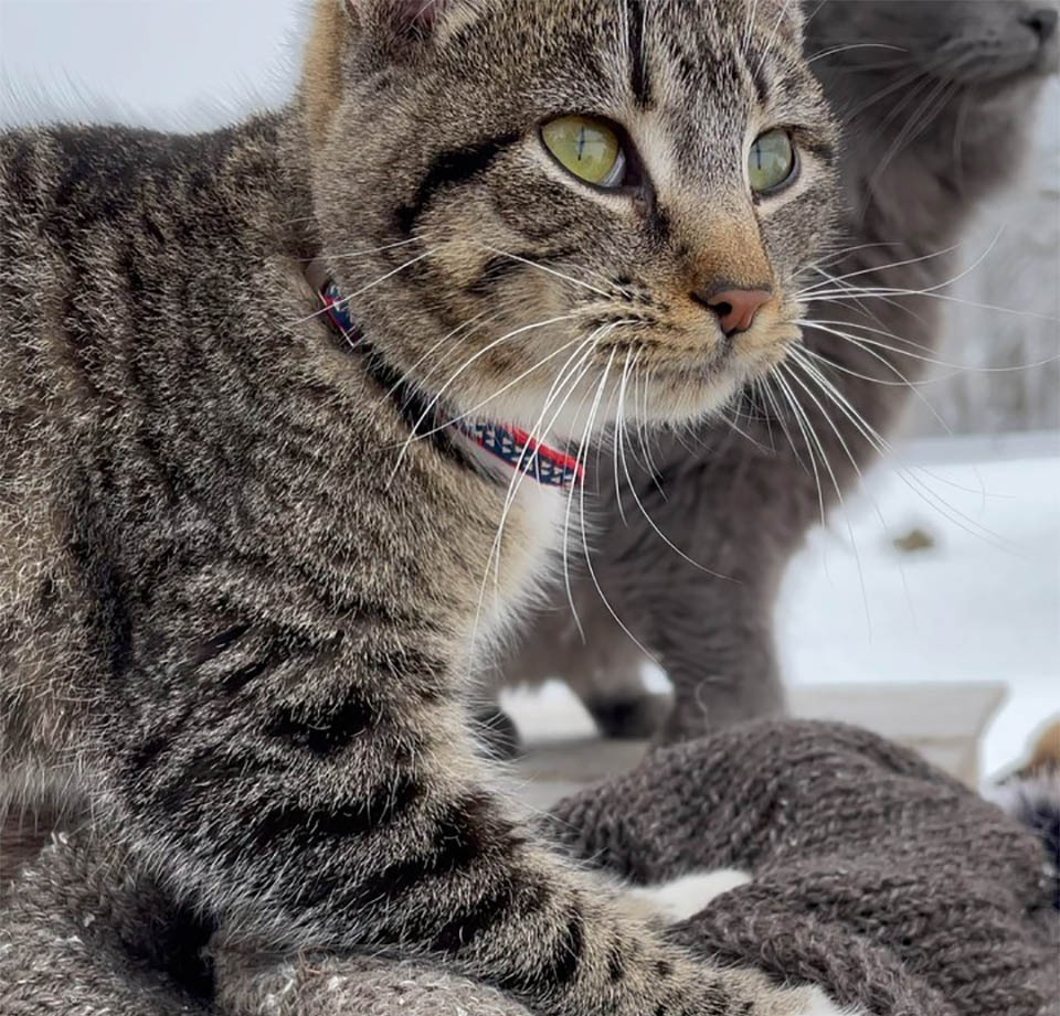 Adorable Ernest