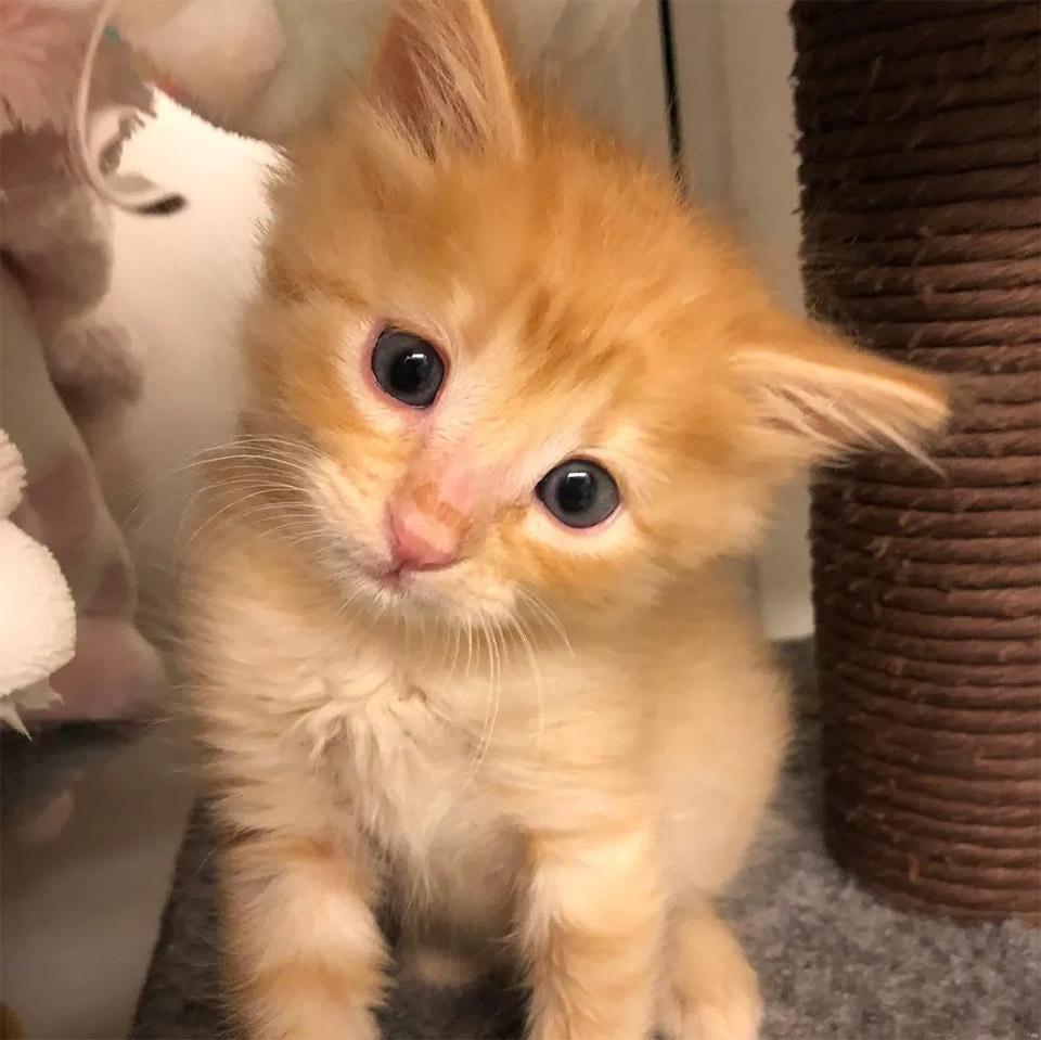 Gatito que fue salvado