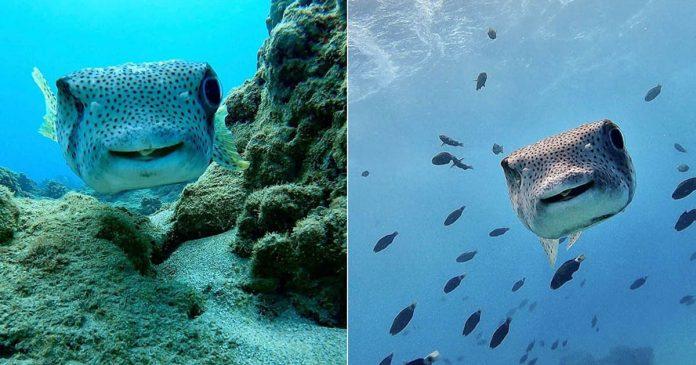 Buzo conoce a un pez sonriente