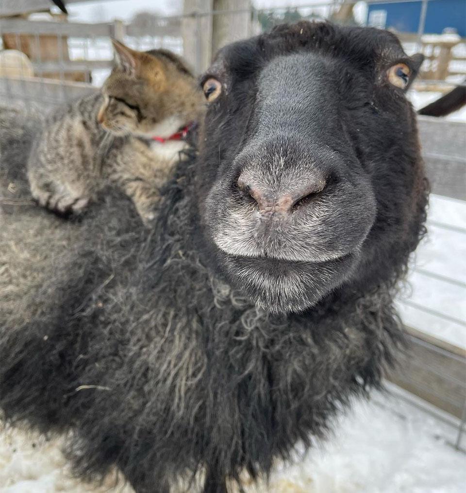 Ernest otros animales