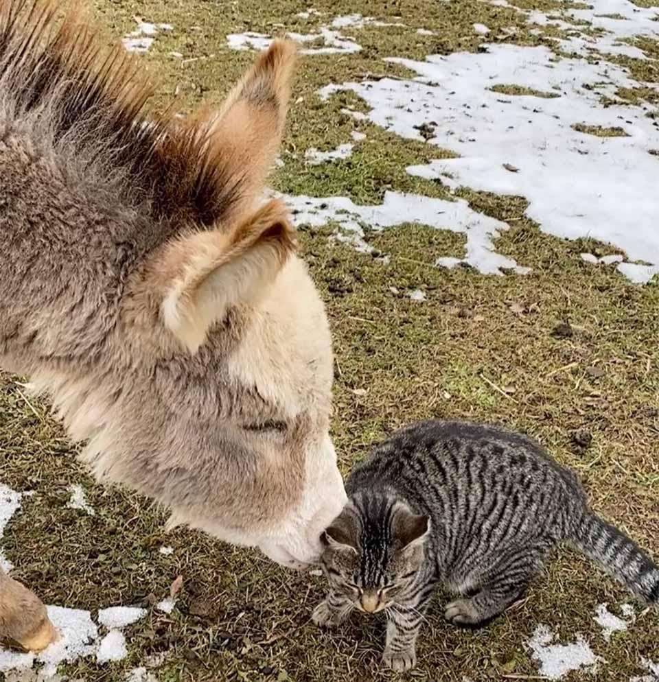 Ernest y burro