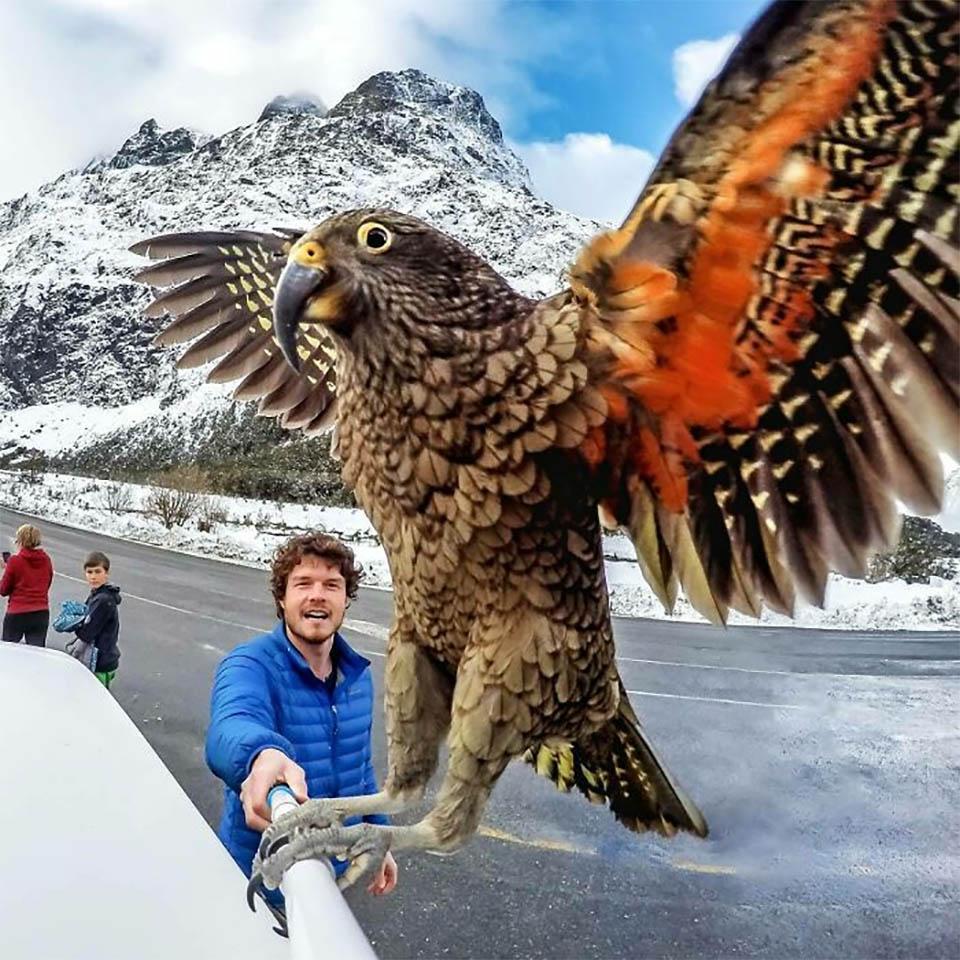 Foto con pájaro