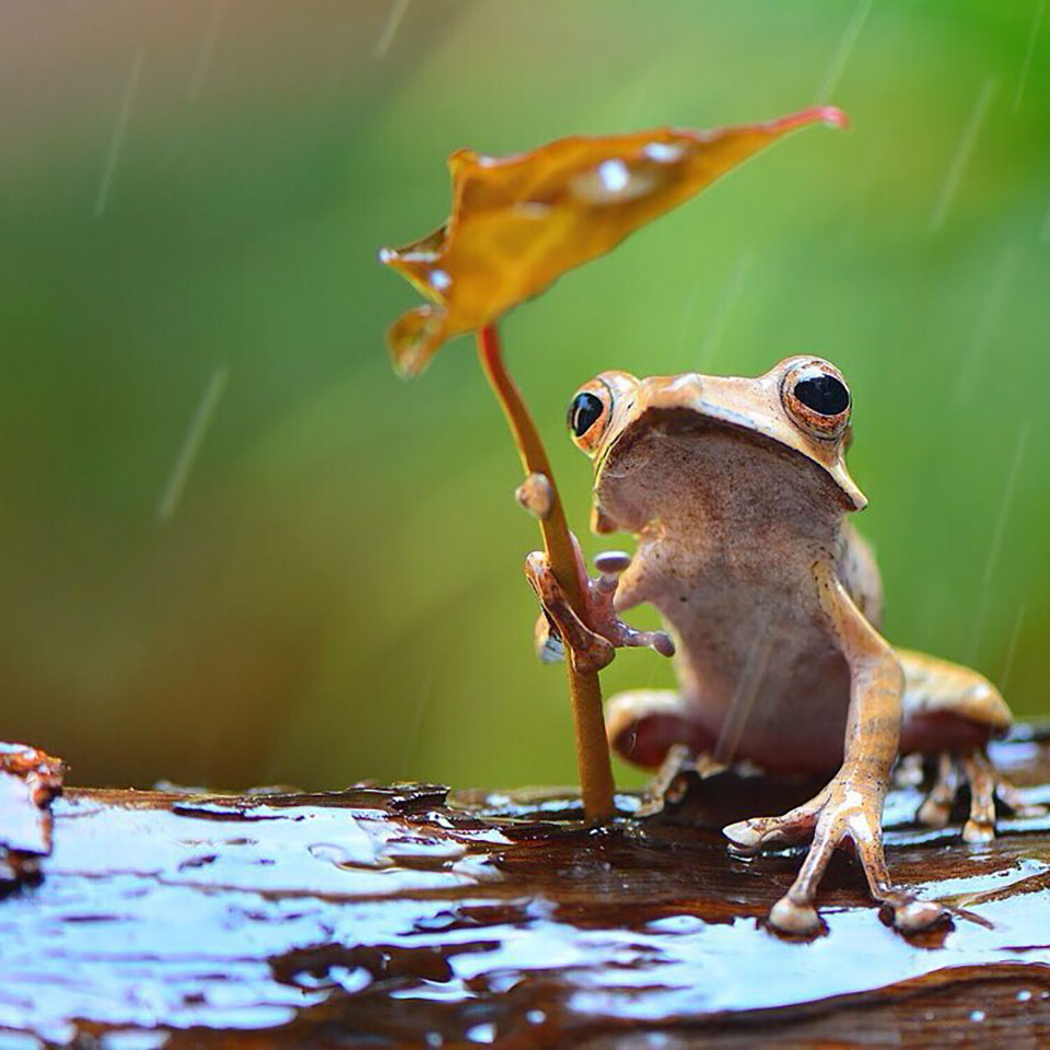 Fotógrafo nota ranas bajo la lluvia