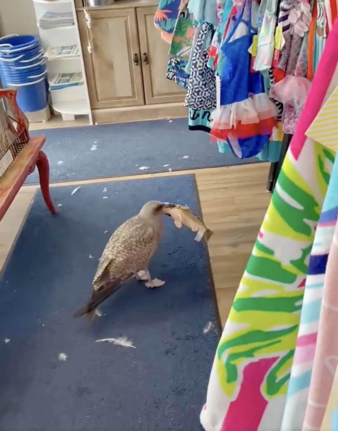 Gaviota ve pez de juguete en tienda de regalos