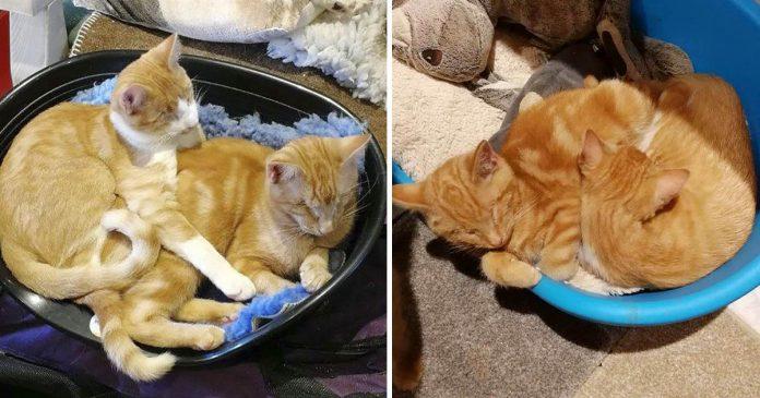 Los gatitos más lindos siguen siendo ignorados porque son ciegos