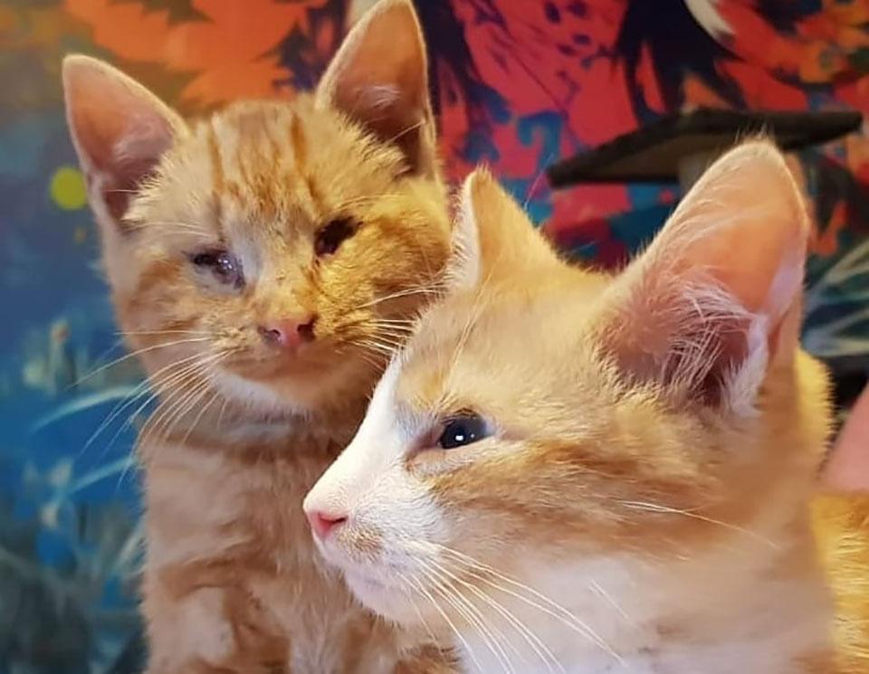 Los gatitos más lindos son ignorados porque son ciegos