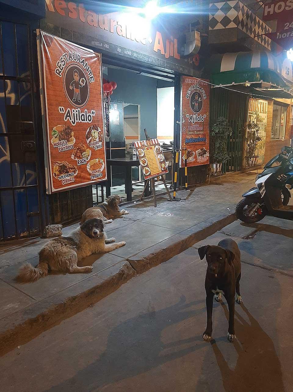 Perritos aguardan por comida