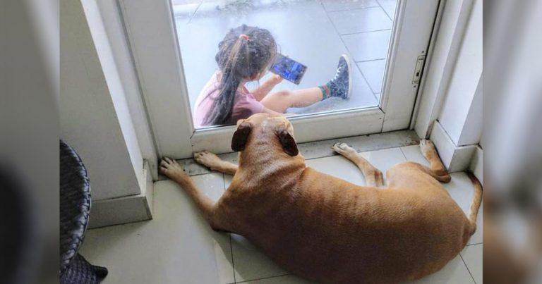 Perrita mayor forma el vínculo más lindo con una niña a través de la puerta