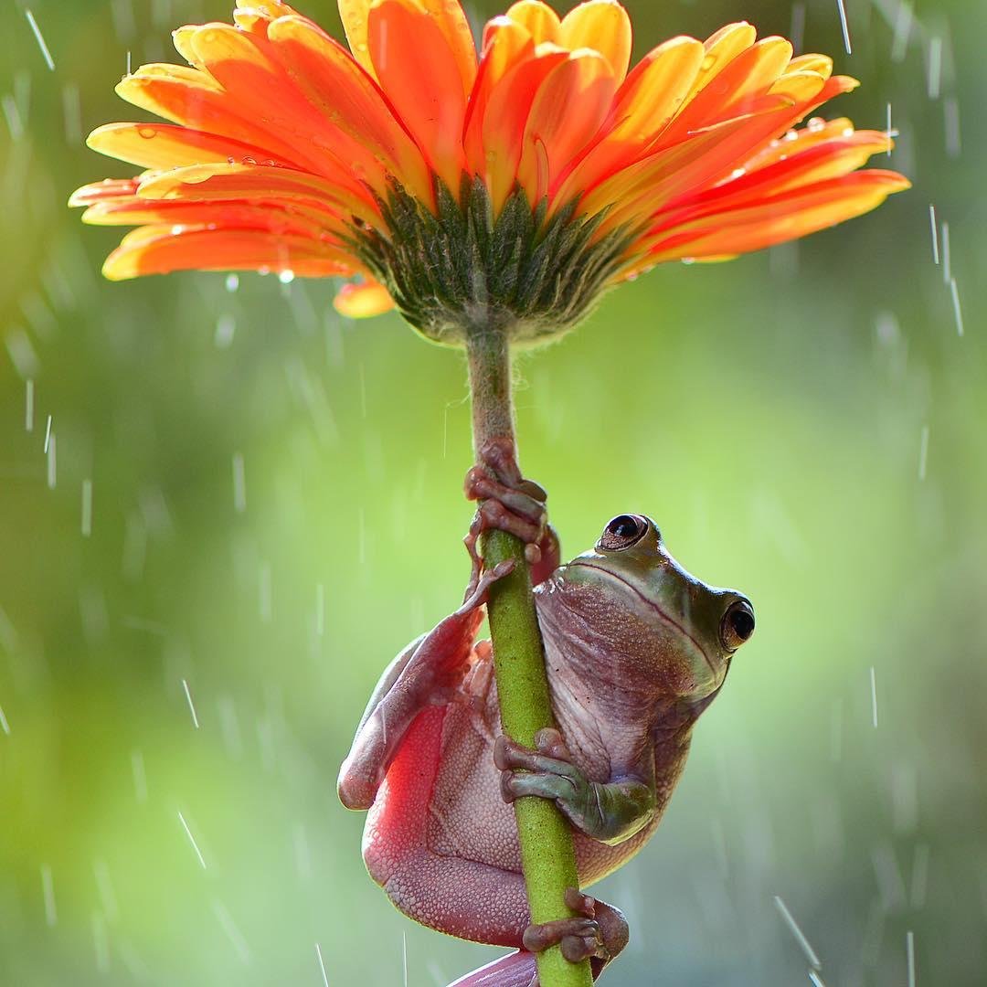 Rana se protege de la lluvia