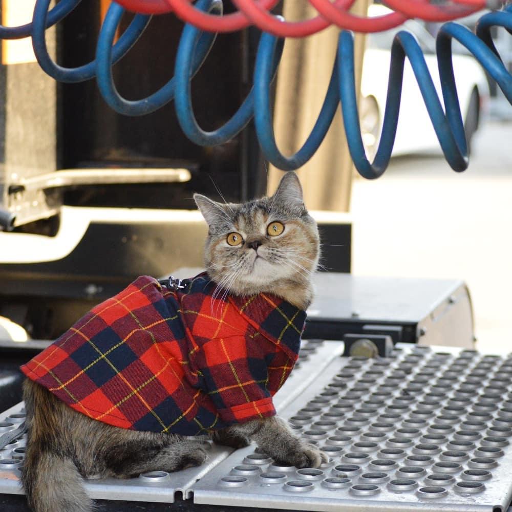 Adorable gatita con camisa