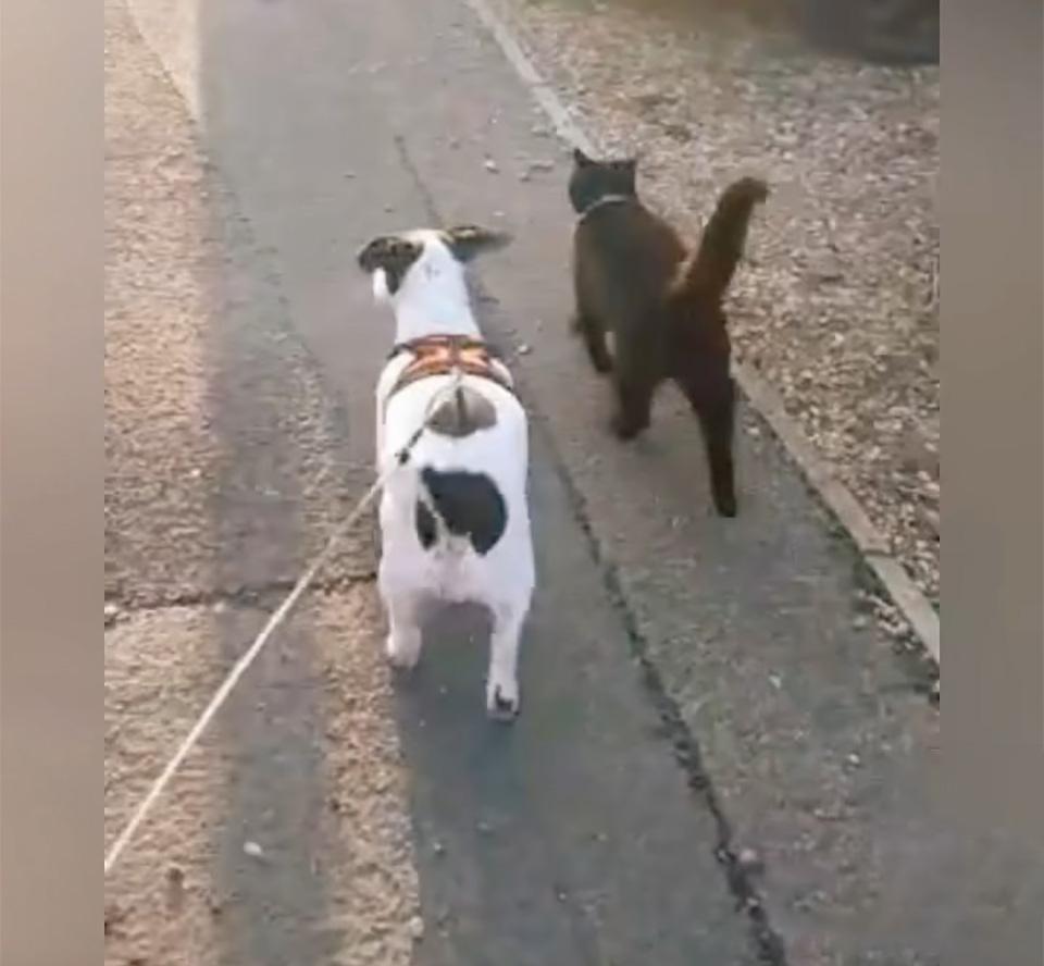 Amigos paseando
