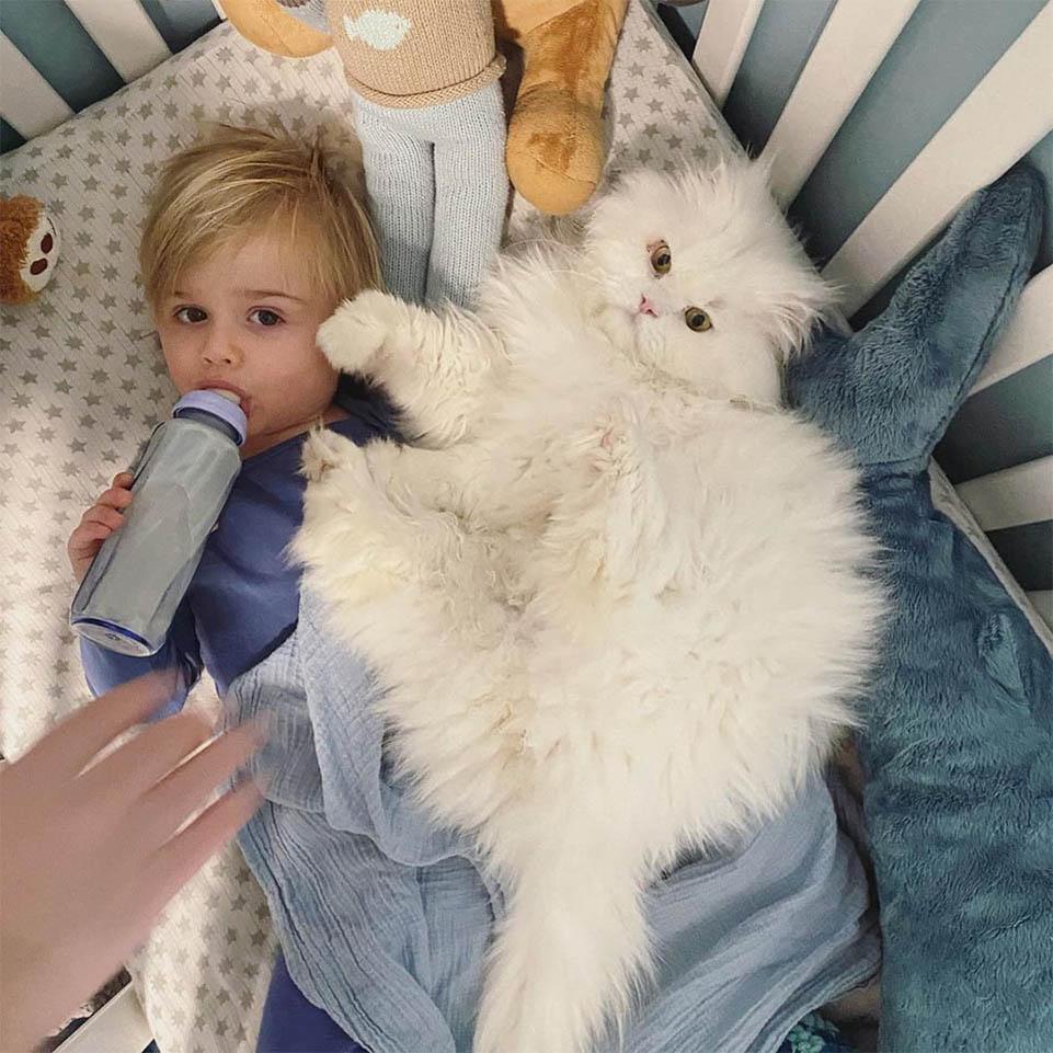 Ash amante de gatos
