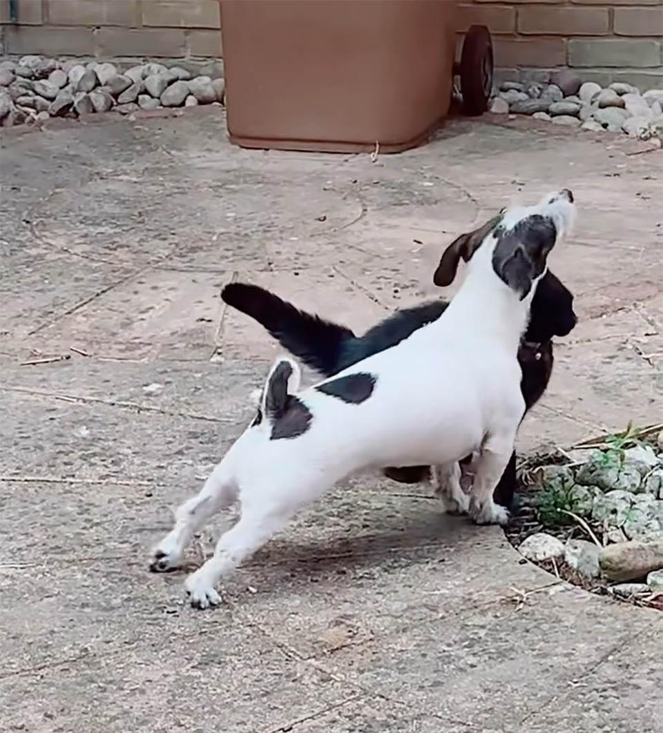 Benji y Gato negro