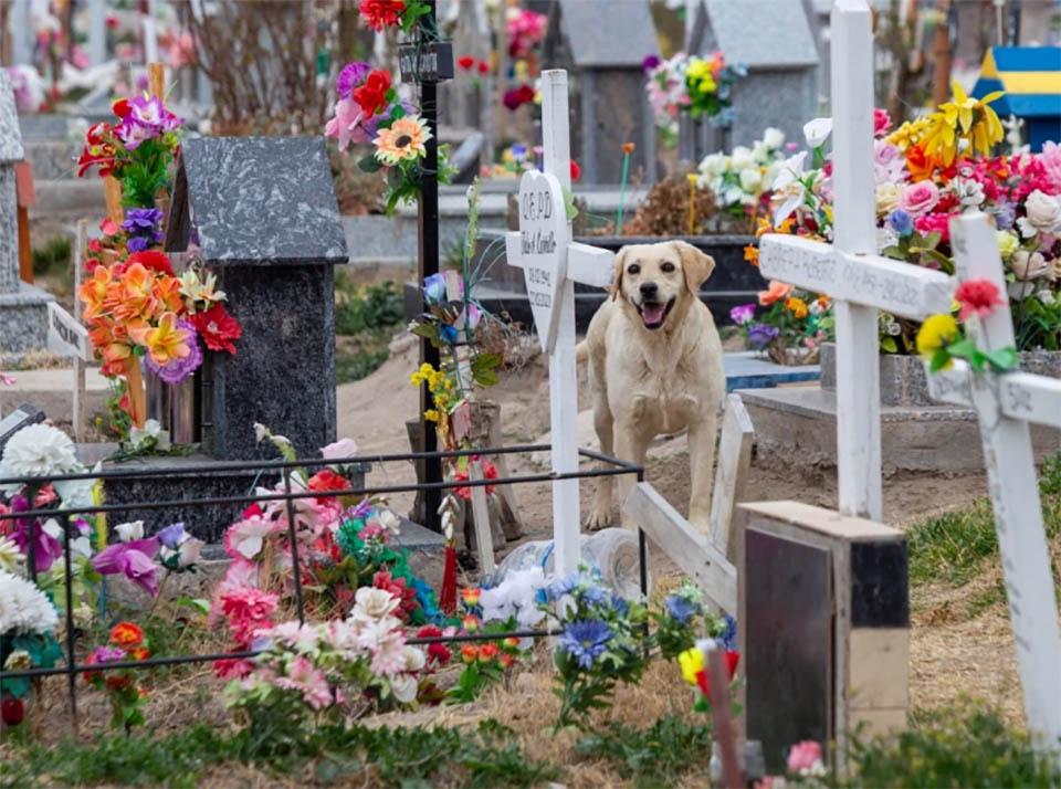 Bobby cementerio