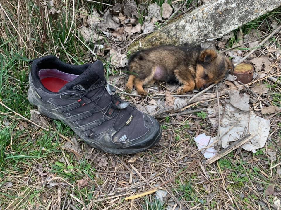 Cachorro abandonado encontrado en un zapato